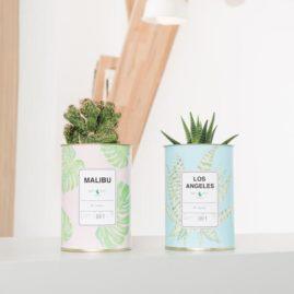 Cactus à message AŸ Cactus